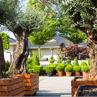 Plantes de jardin et terrasse
